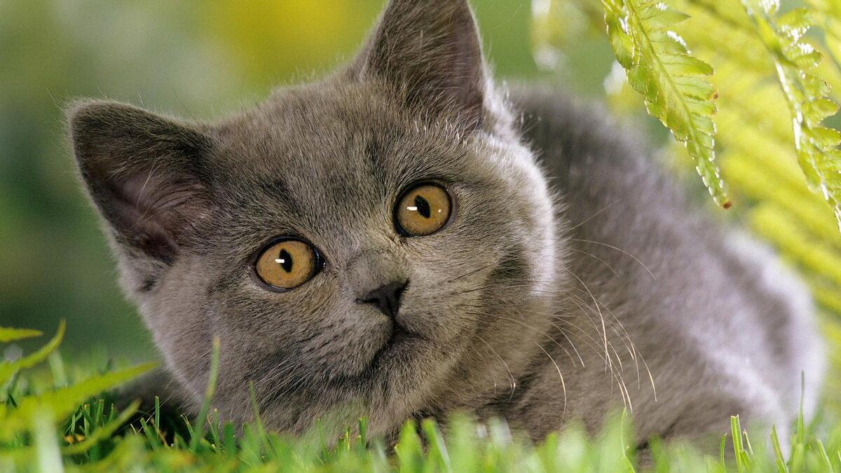 этой картинки с серыми кошками на рабочий стол весеннем