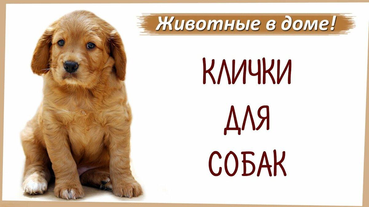 запытить имена собак с картинками оказалось