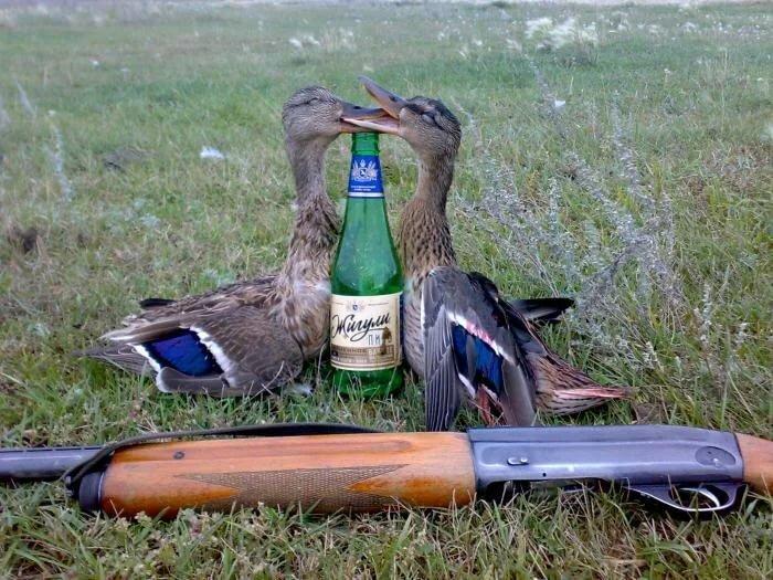 Картинка утка с ружьем