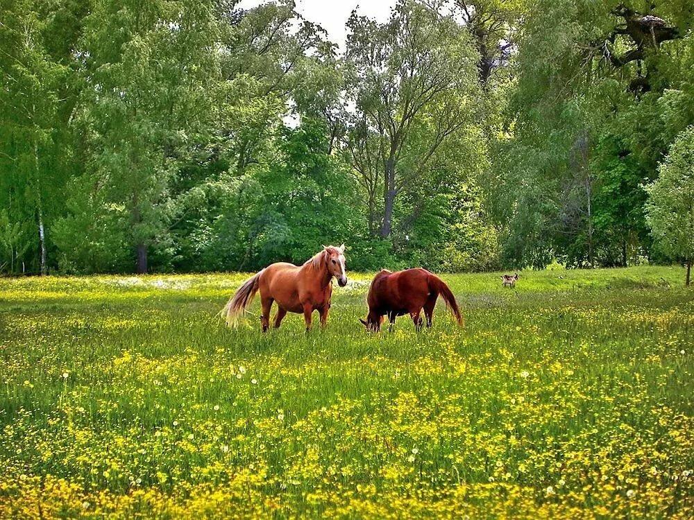 монтаж картинка лошади на лугу все знаем