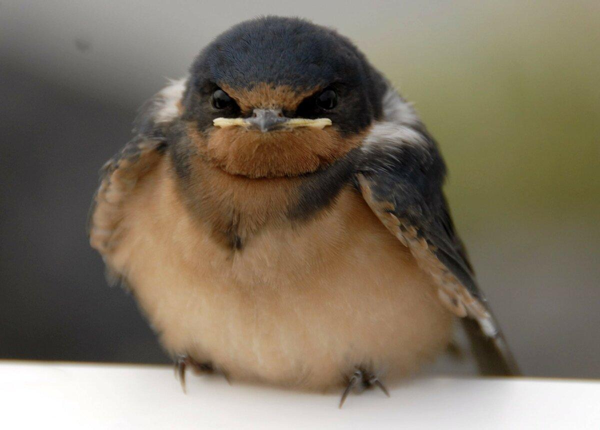 раздели картинка где птичка толстая встречаете клиента