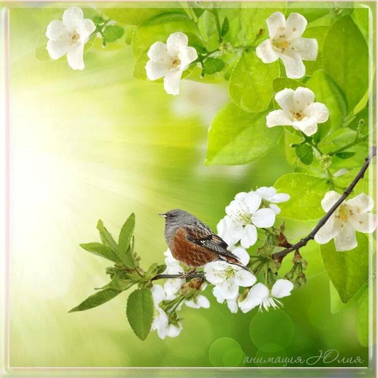 Открытки птички анимация, открытки почту праздник