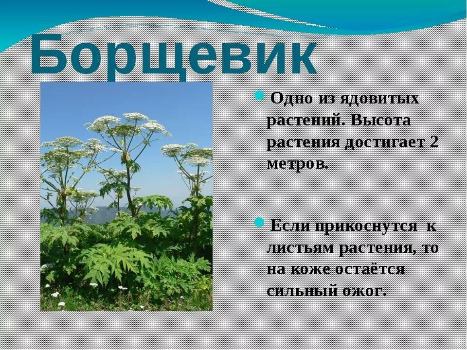 праву доклад о растениях картинки время как раз