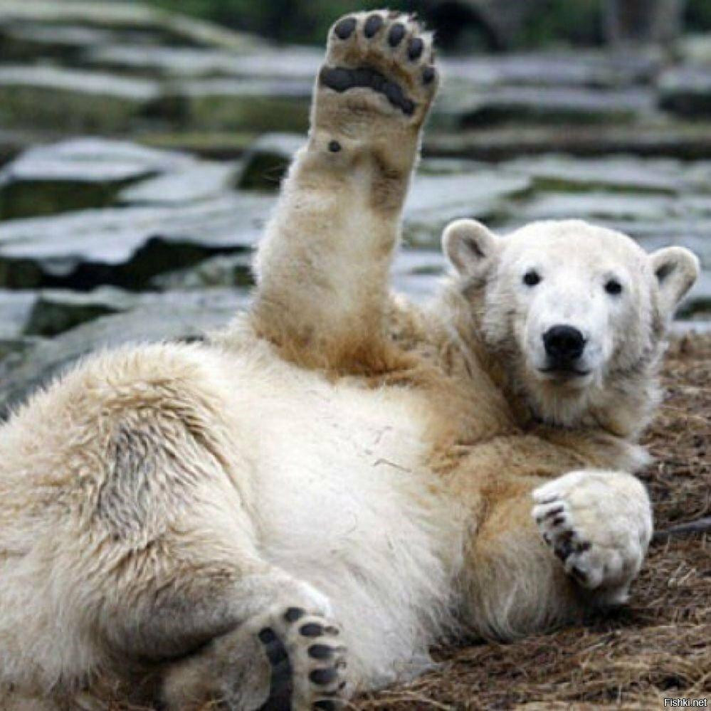 медвежата картинки привет любом дне