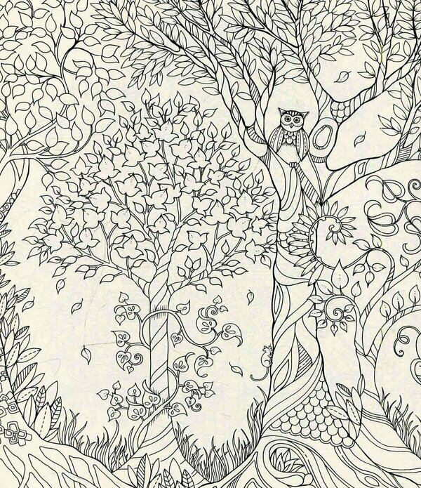 Молчишь, лес чудес 32 картины для раскрашивания и лист открыток