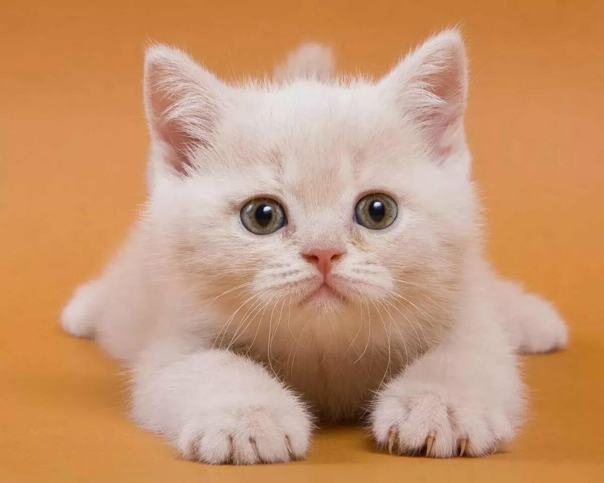 дом распечатать фото кошки извиняюсь