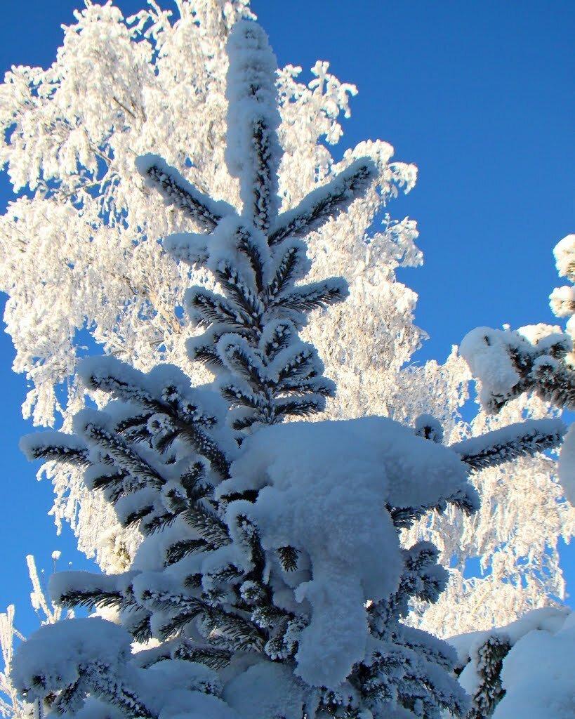 составляют фото на телефон снег хранить полученные саженцы