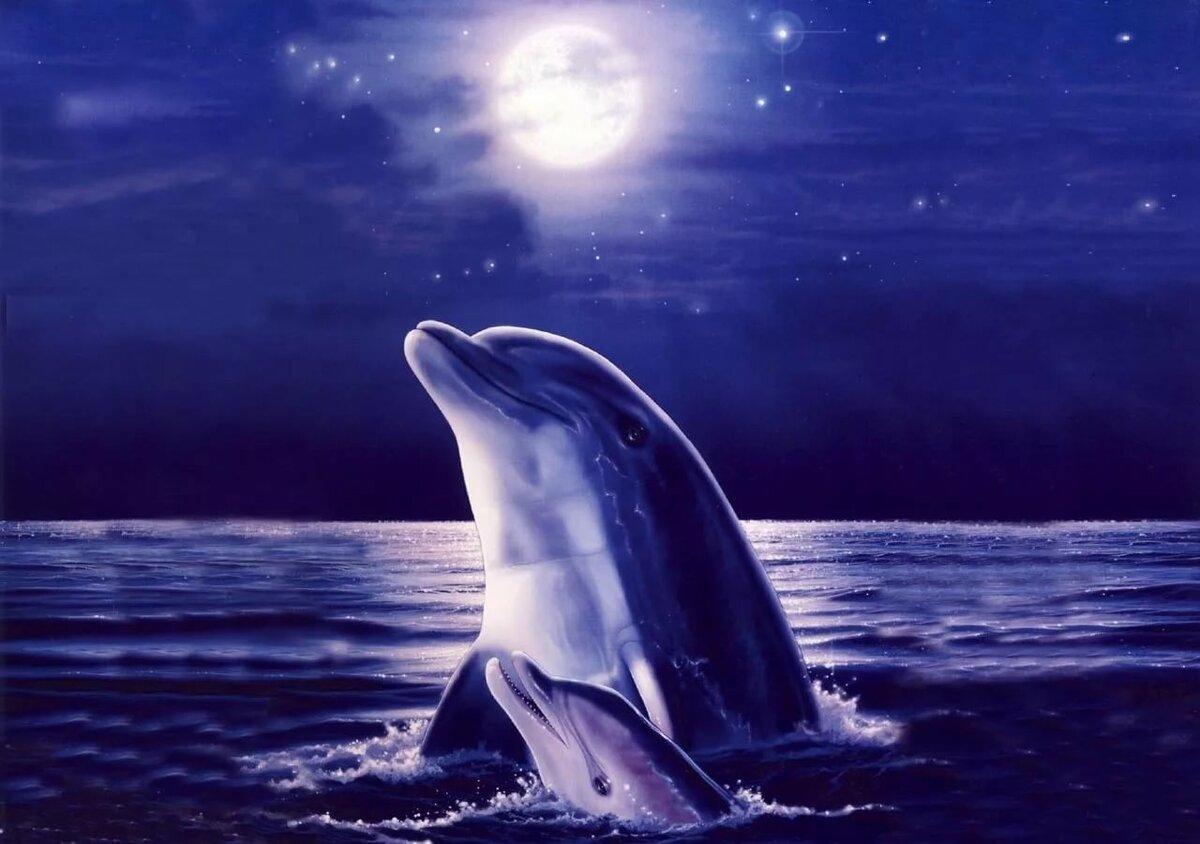 Дельфины картинки на аватарку