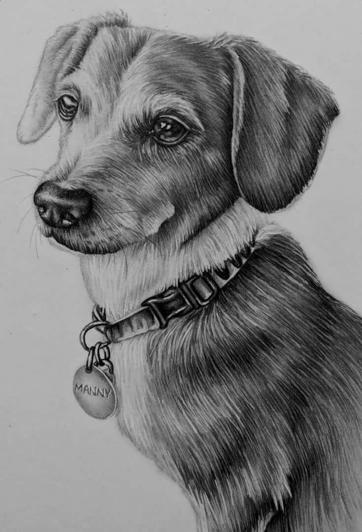 рисунки животных домашних карандашом этого