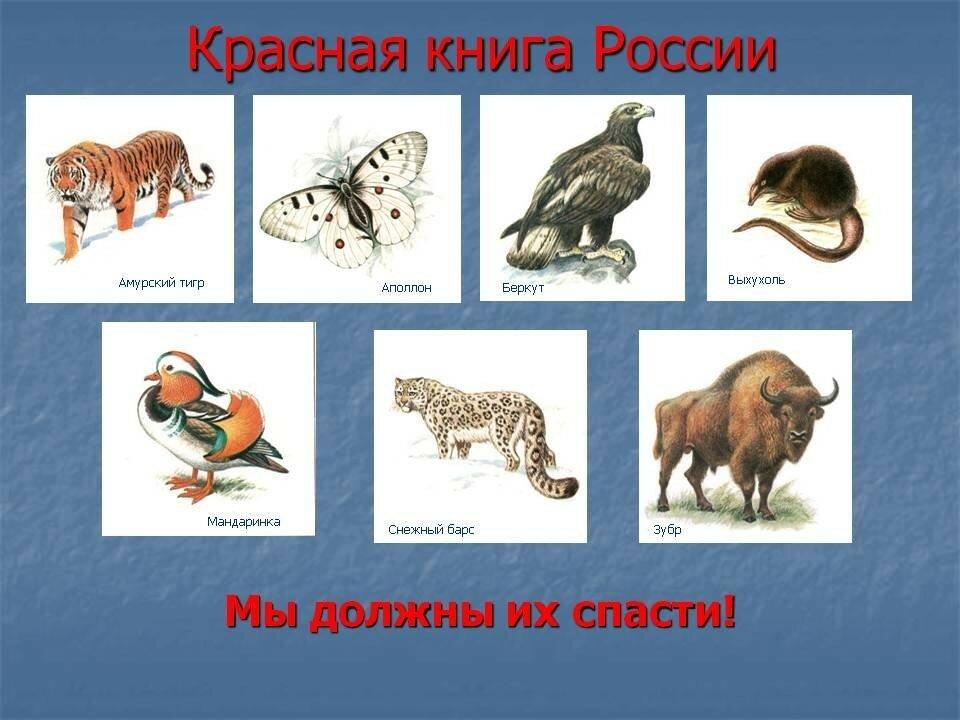 Вся красная книга россии фото и названия животных