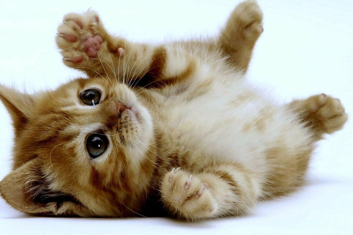 Поздравления, живые картинки коты