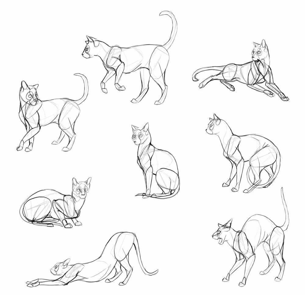 Картинки поз котов если взять