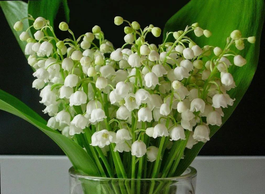 всего картинка цветы ландыши нарциссы лилии детям