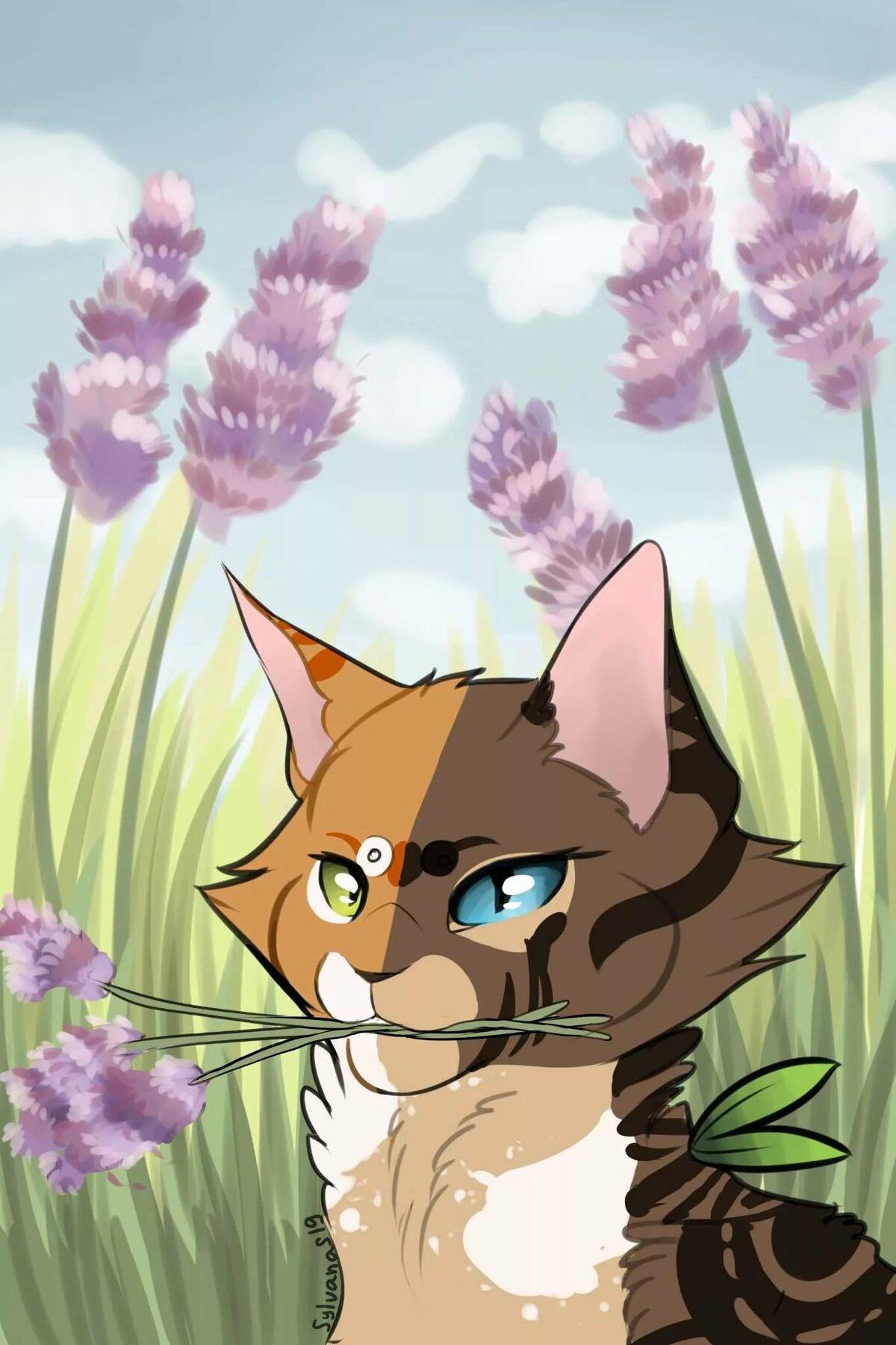 Травы котов воителей картинки