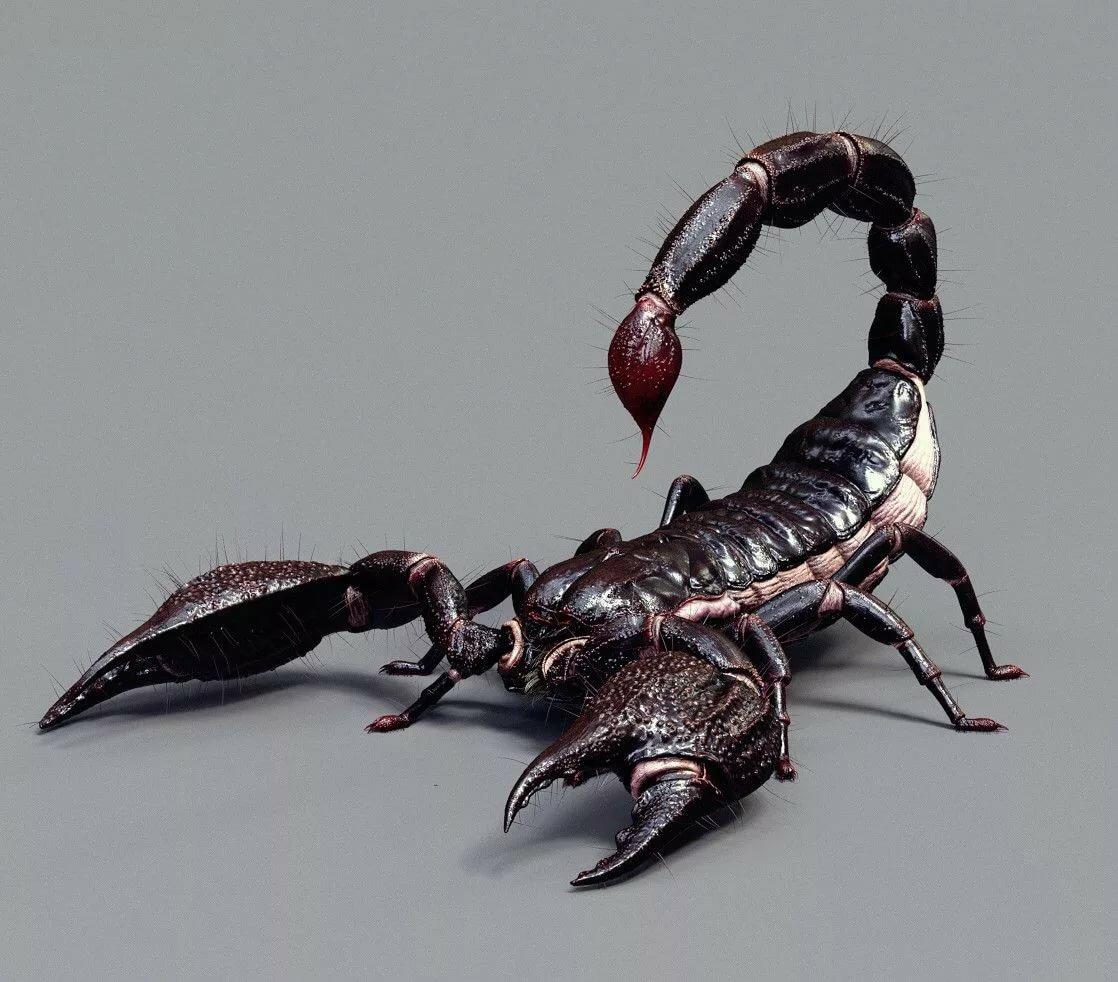 картинки скорпионов арт сердечком добрым