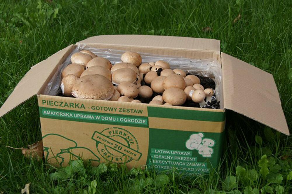 Набор для выращивания грибов Домашняя Грибница в Курске
