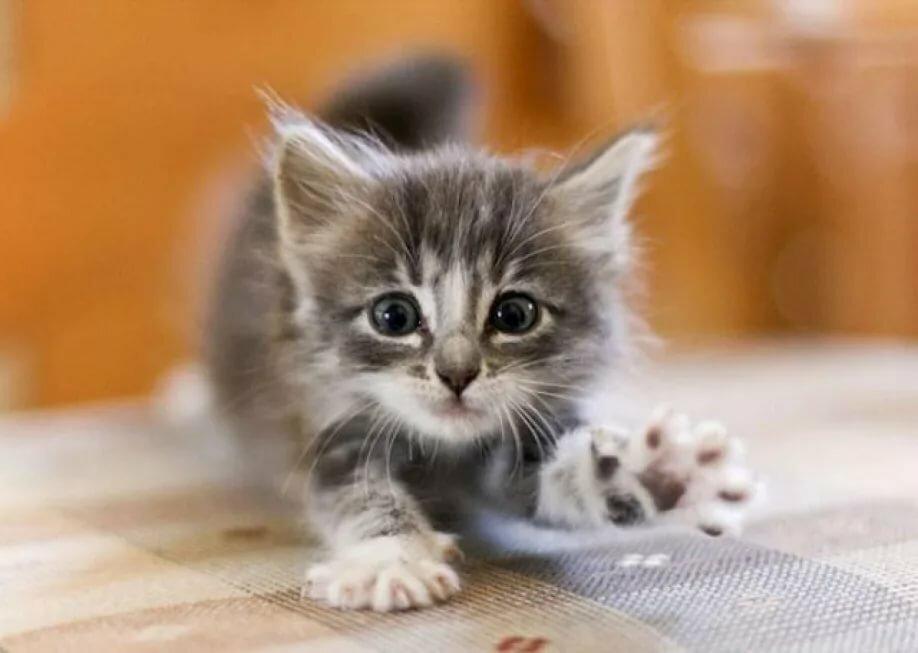 Подруге, картинки котята маленькие красивые