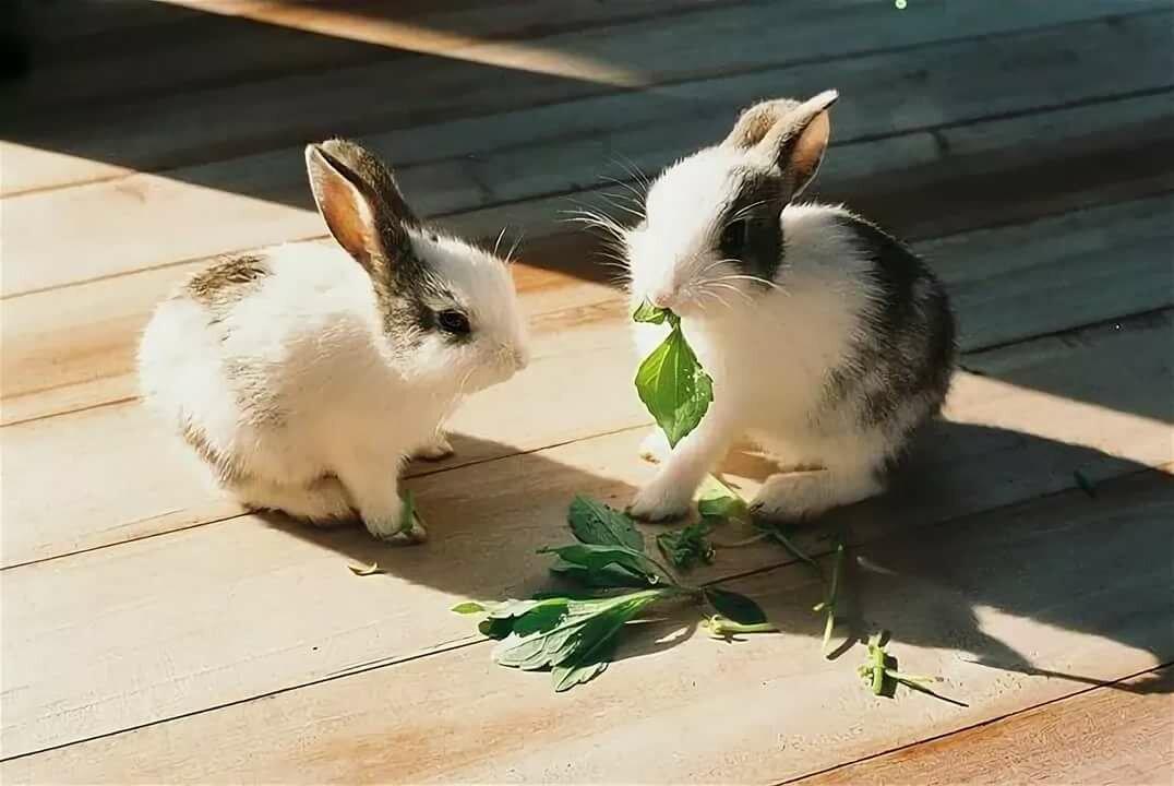 Что ест зайчик картинки