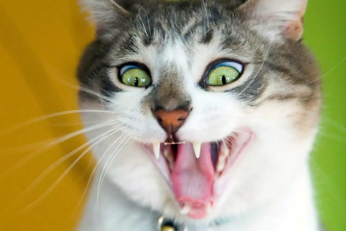 Чечни, смешные картинки с животными до слез без надписей