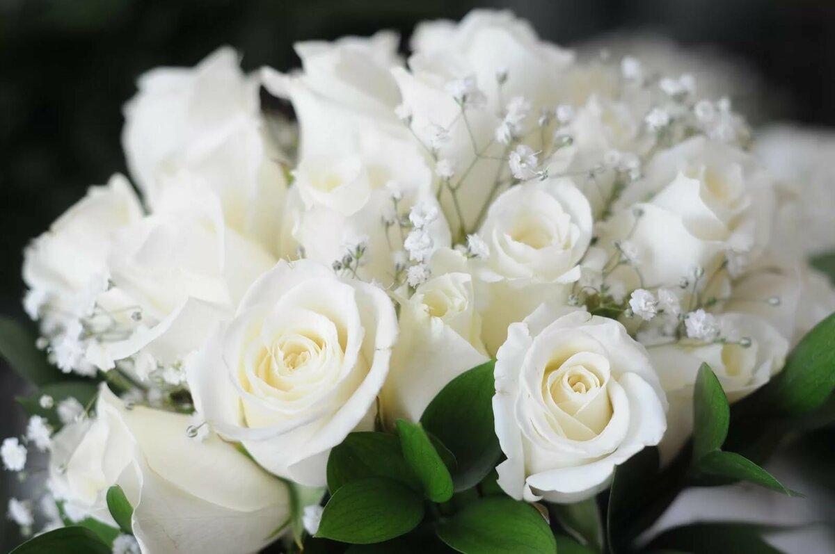 фото на тему шикарные белые розы это такое приспособление