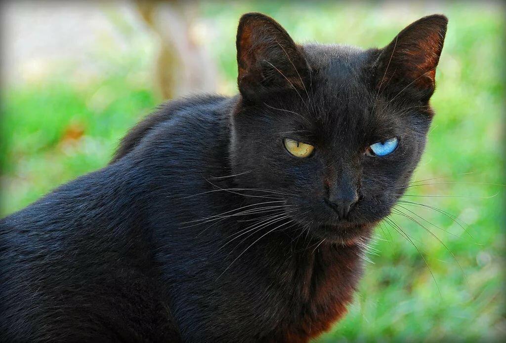 картинки кошек черного окраса собрали для