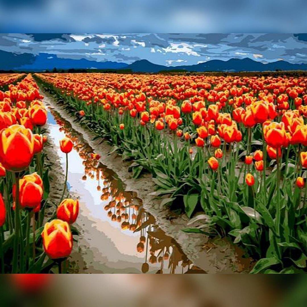 Картинки природы красивые цветы