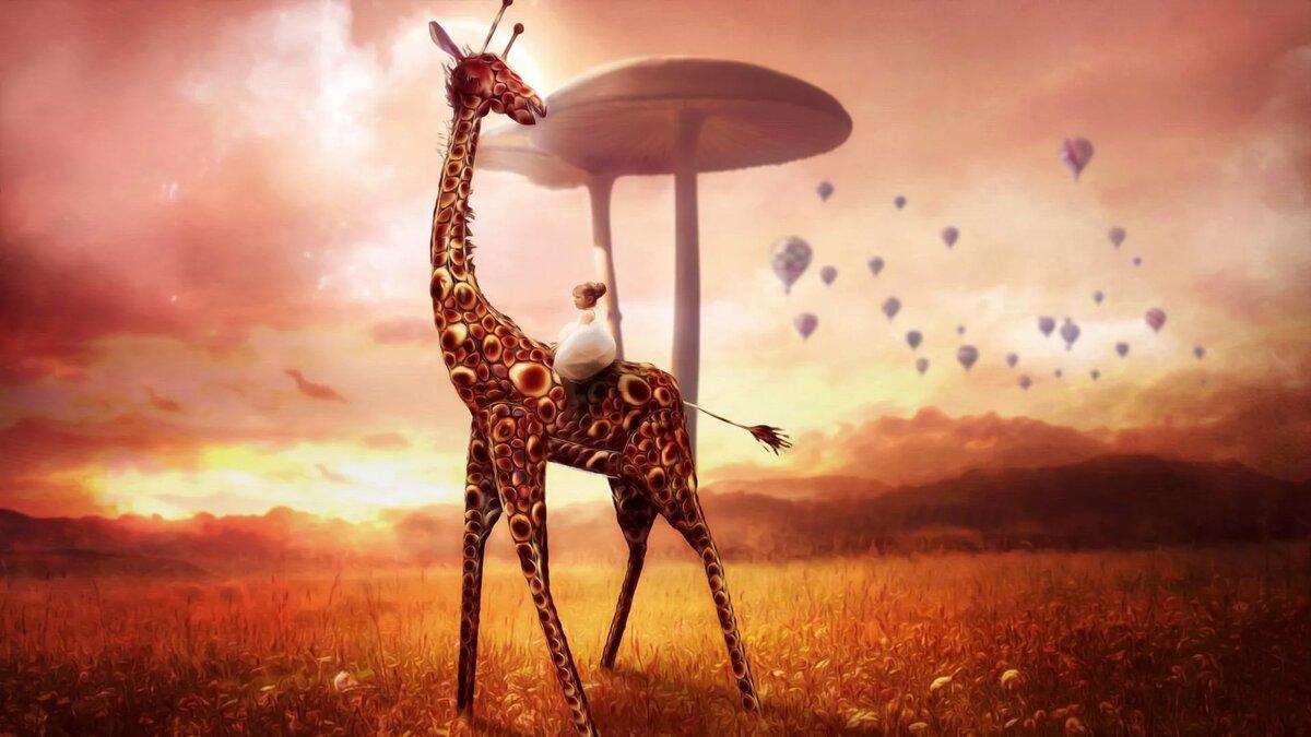 картинка три жирафа его словам, несмотря