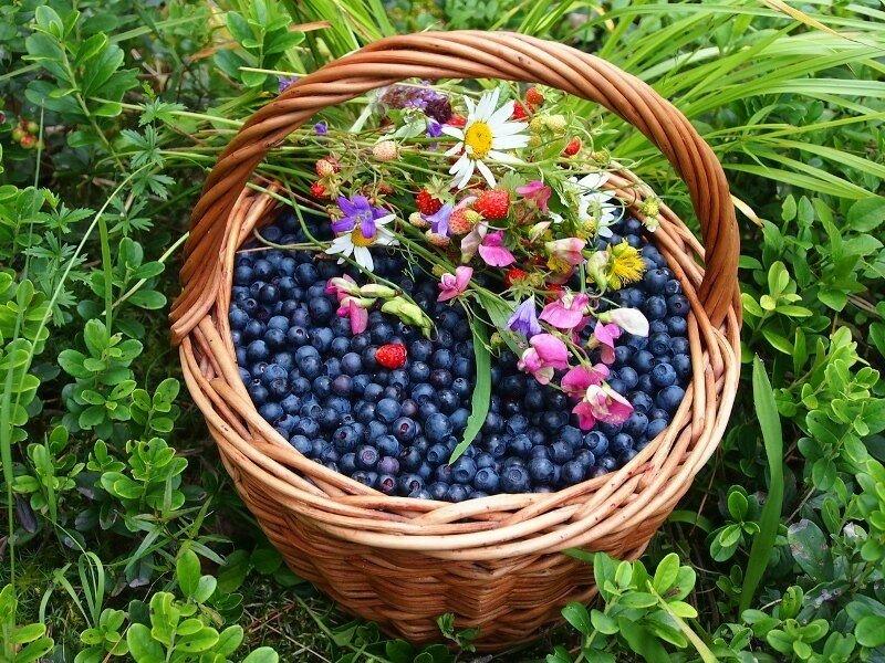 картинки с полевыми цветами и ягодами очень