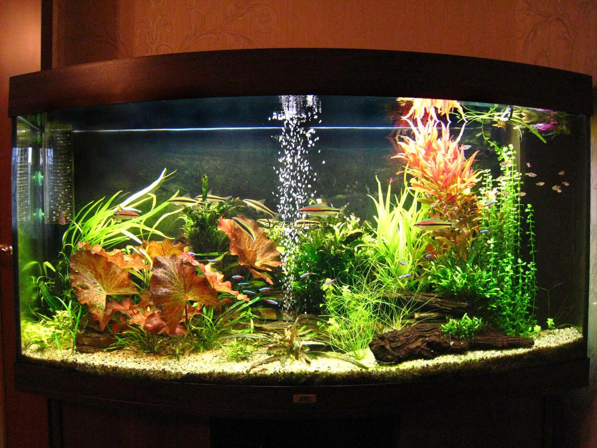 Картинки для домашнего аквариума