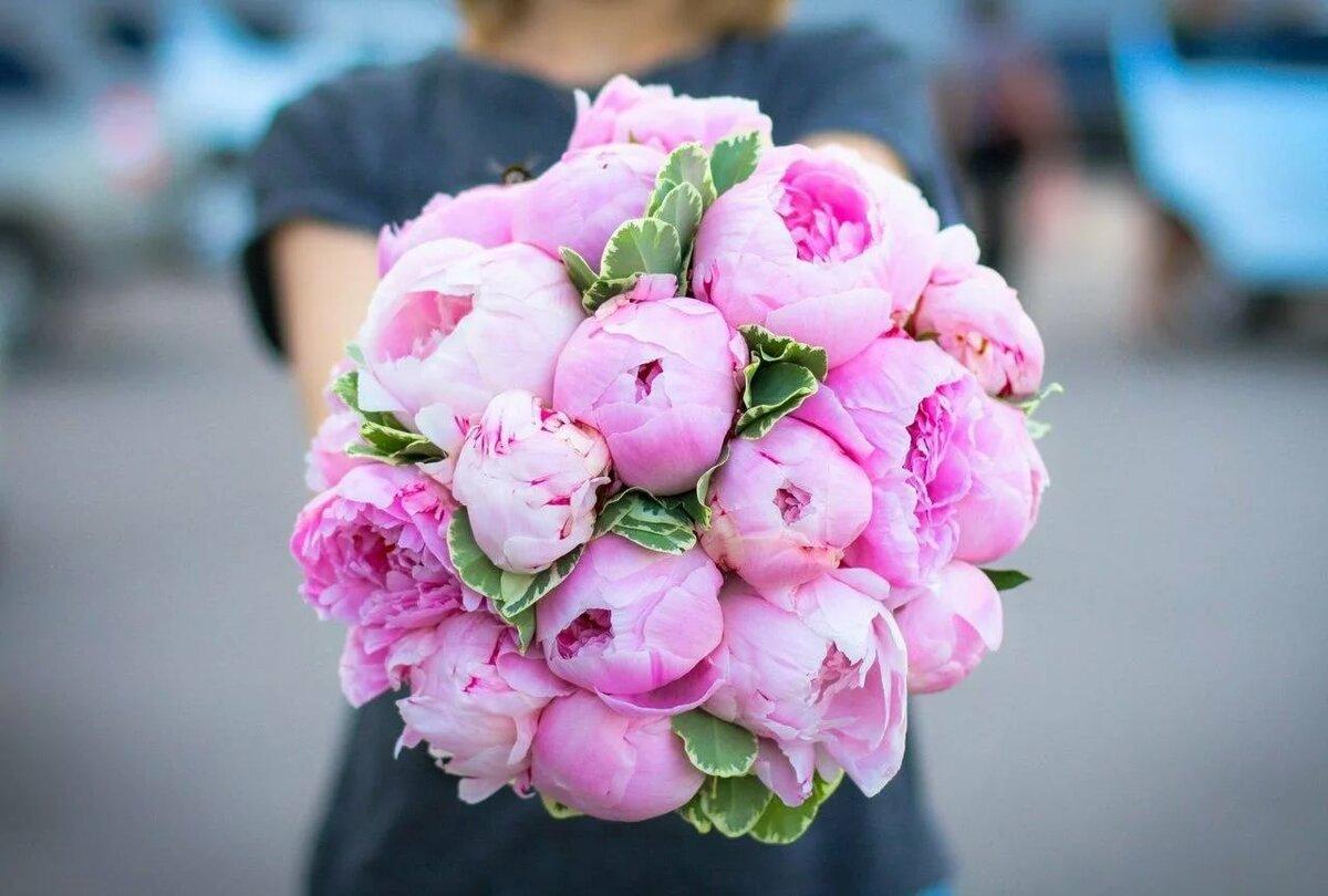 Пионы букеты купить в спб, цветы иркутск заказ