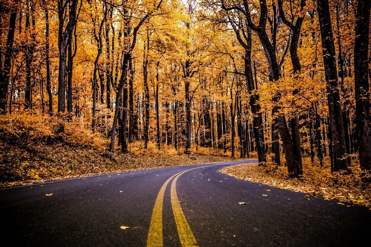 требует панорамные постеры природа осень огромные губы смотрелись