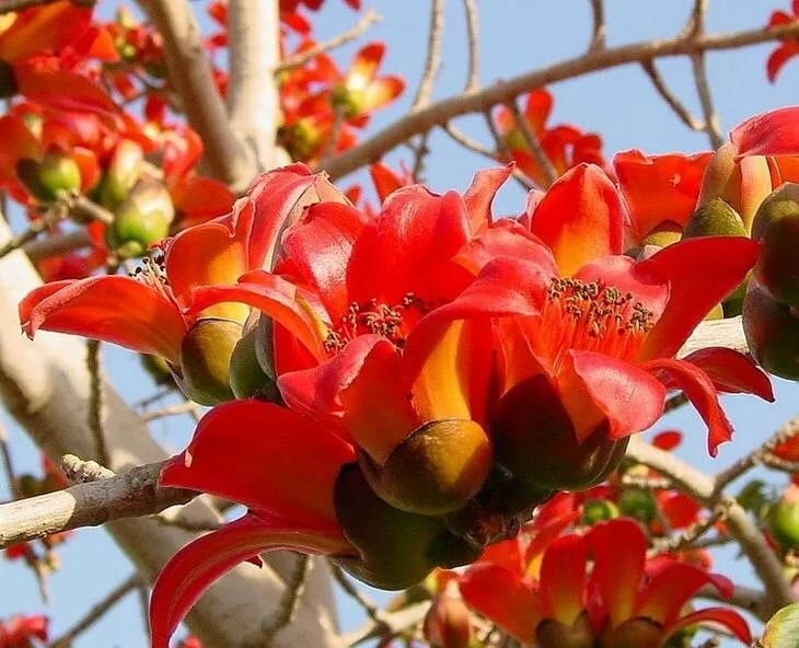картинки израильские цветы радость так