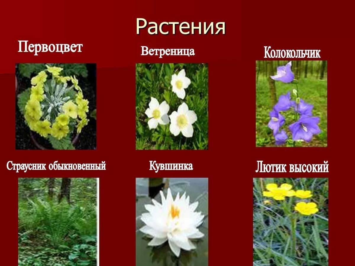 Картинки редких растений в красной книге