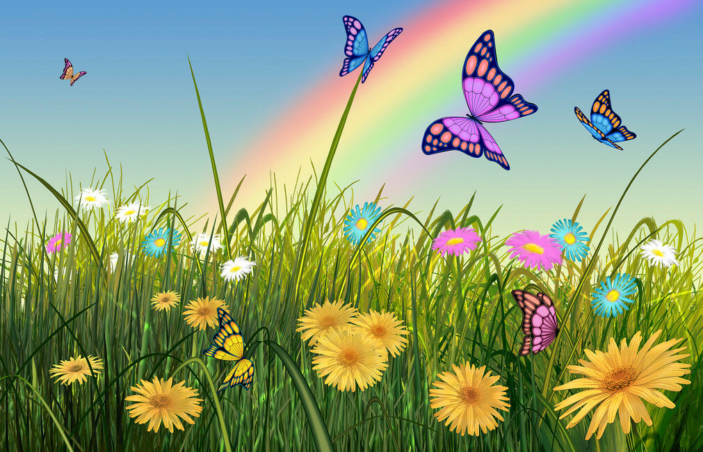 Картинка бабочки на поляне