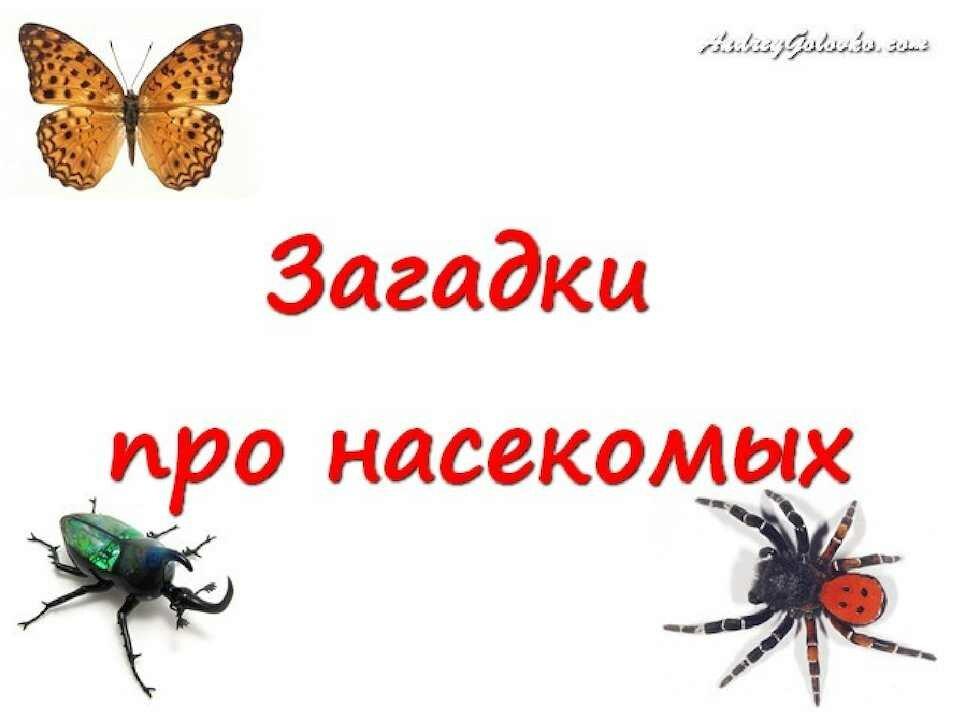 Стихи про насекомых в картинках для детей