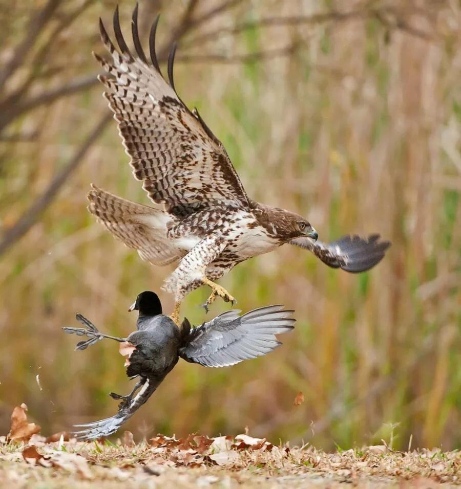 этого аттракциона фотоохота на птиц советы методика болт пронумерован