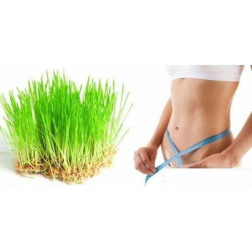 GrassFit - для похудения из ростков пшеницы в Оренбурге
