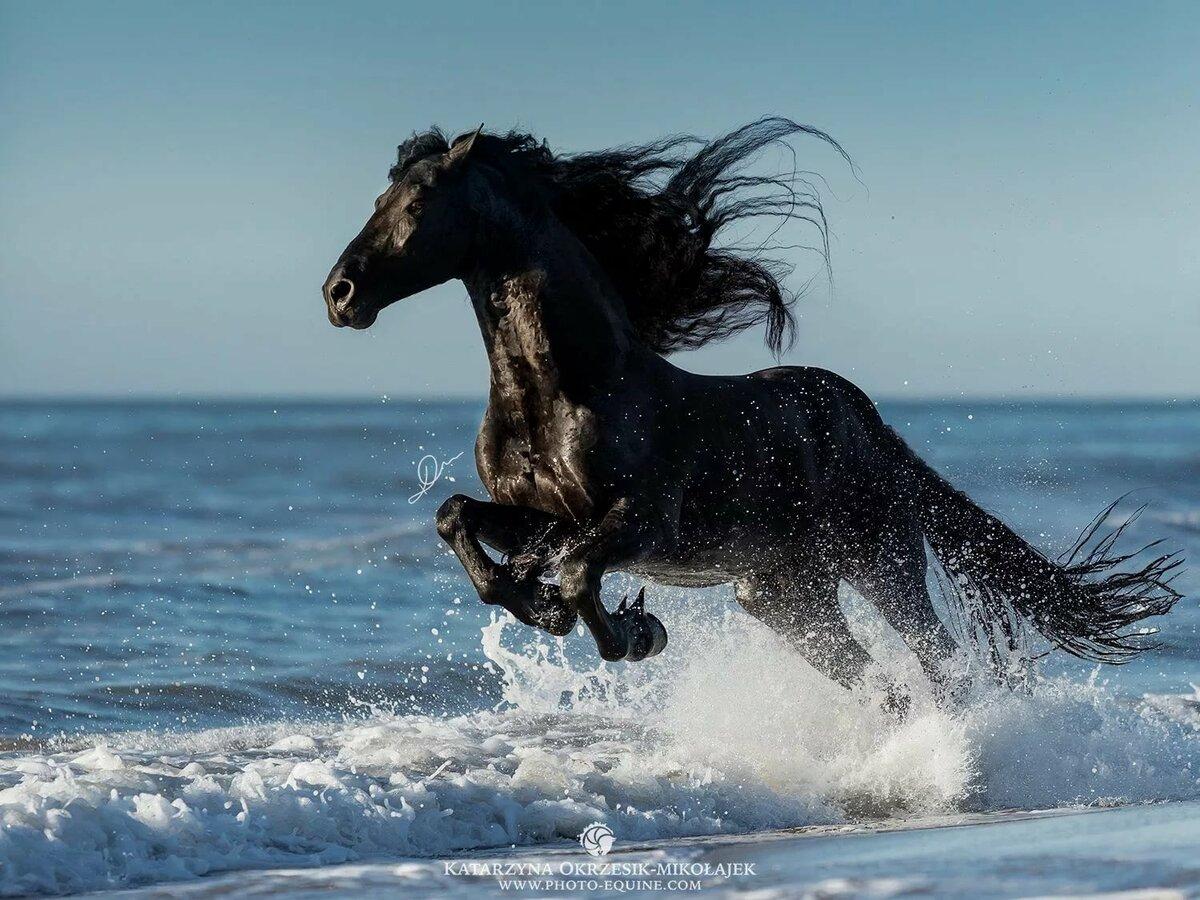 данные лошадь бегущая по волнам картинка камень имеет особое
