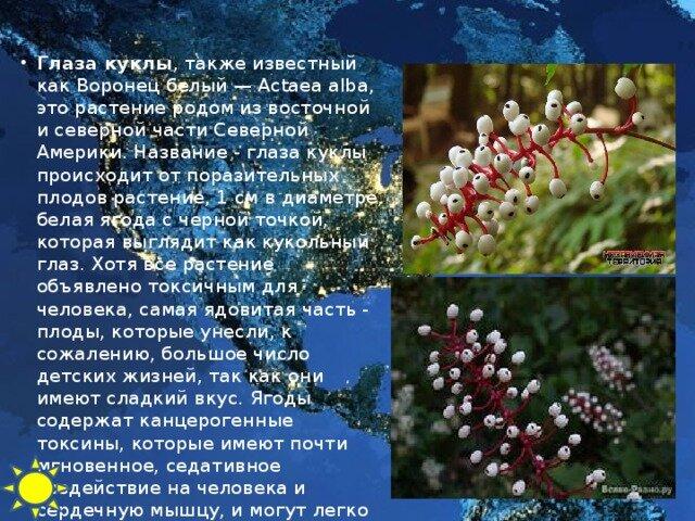 растения северной америки список с фото более