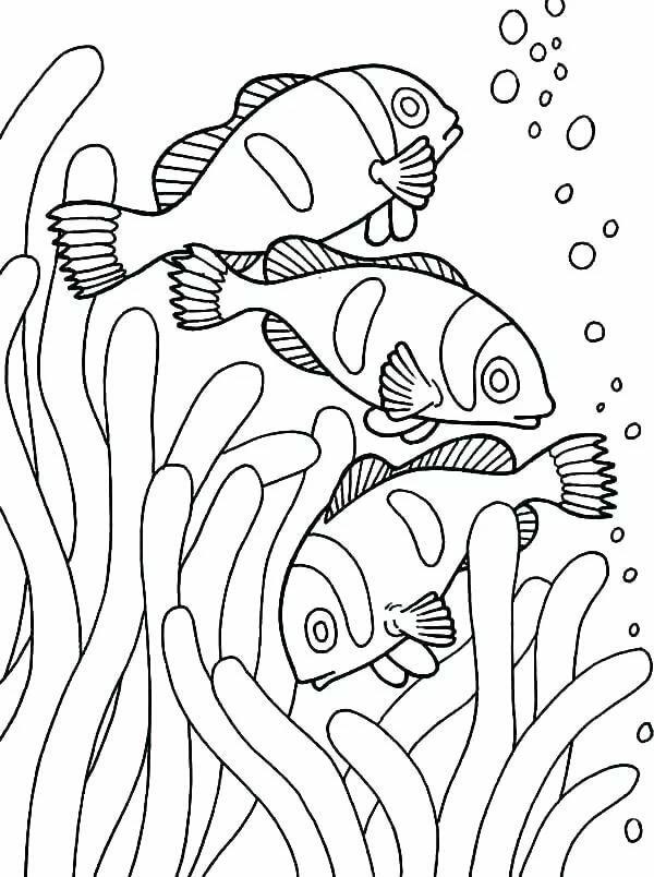 Шаблоны морской темы для печати на принтере, для