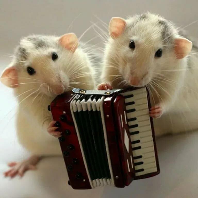 Марта открытки, мыши картинки смешные