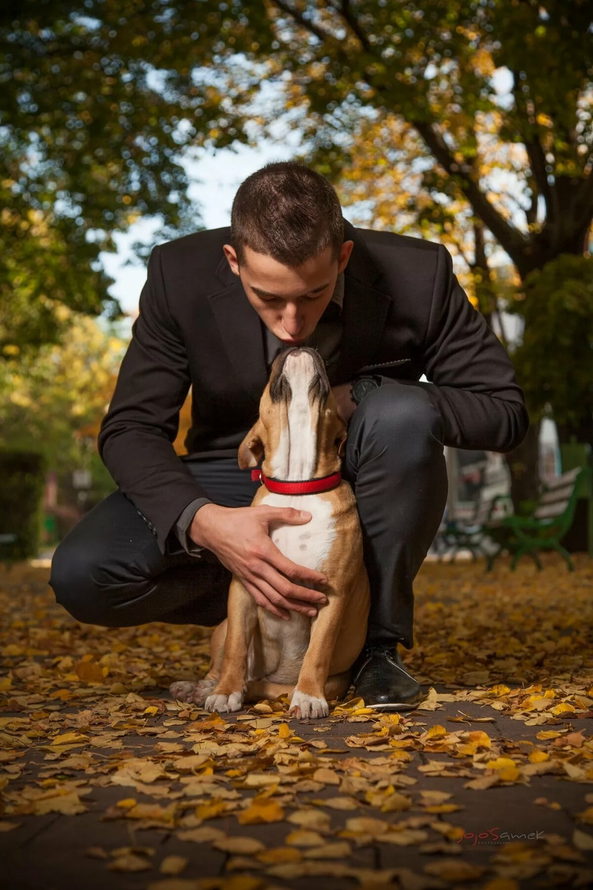 Картинка человека с собаками