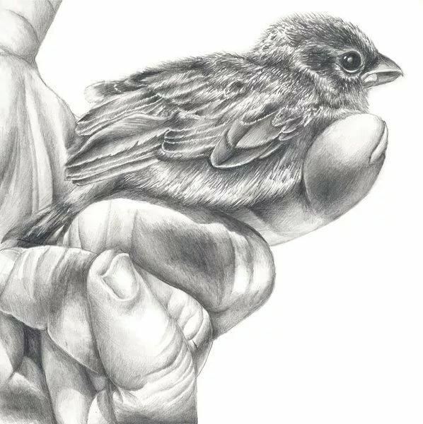 картинки диких птиц простым карандашом сайте