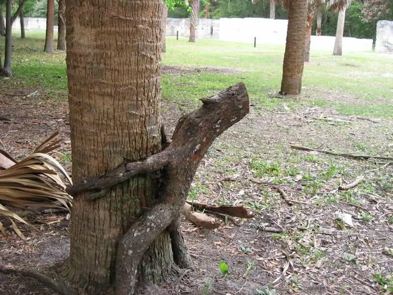 выебал под деревом смотреть через