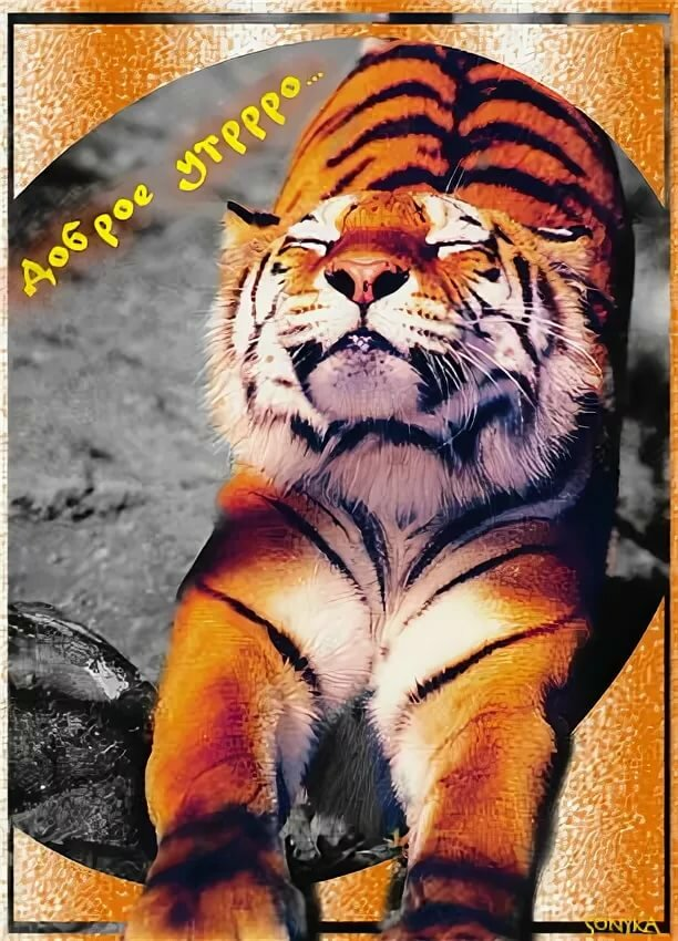 картинки с добрым утром любимый тигренок деревушке шато д'э