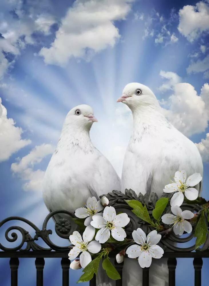 Поздравления на свадьбу открытки голуби