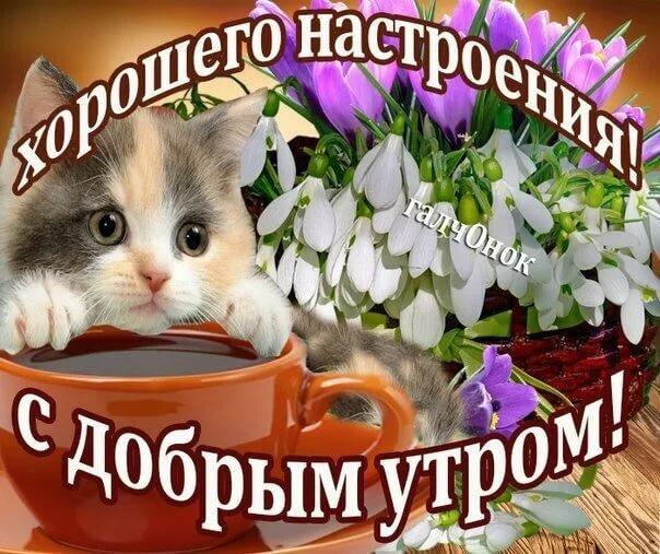 Открытка с добрым утром котенок