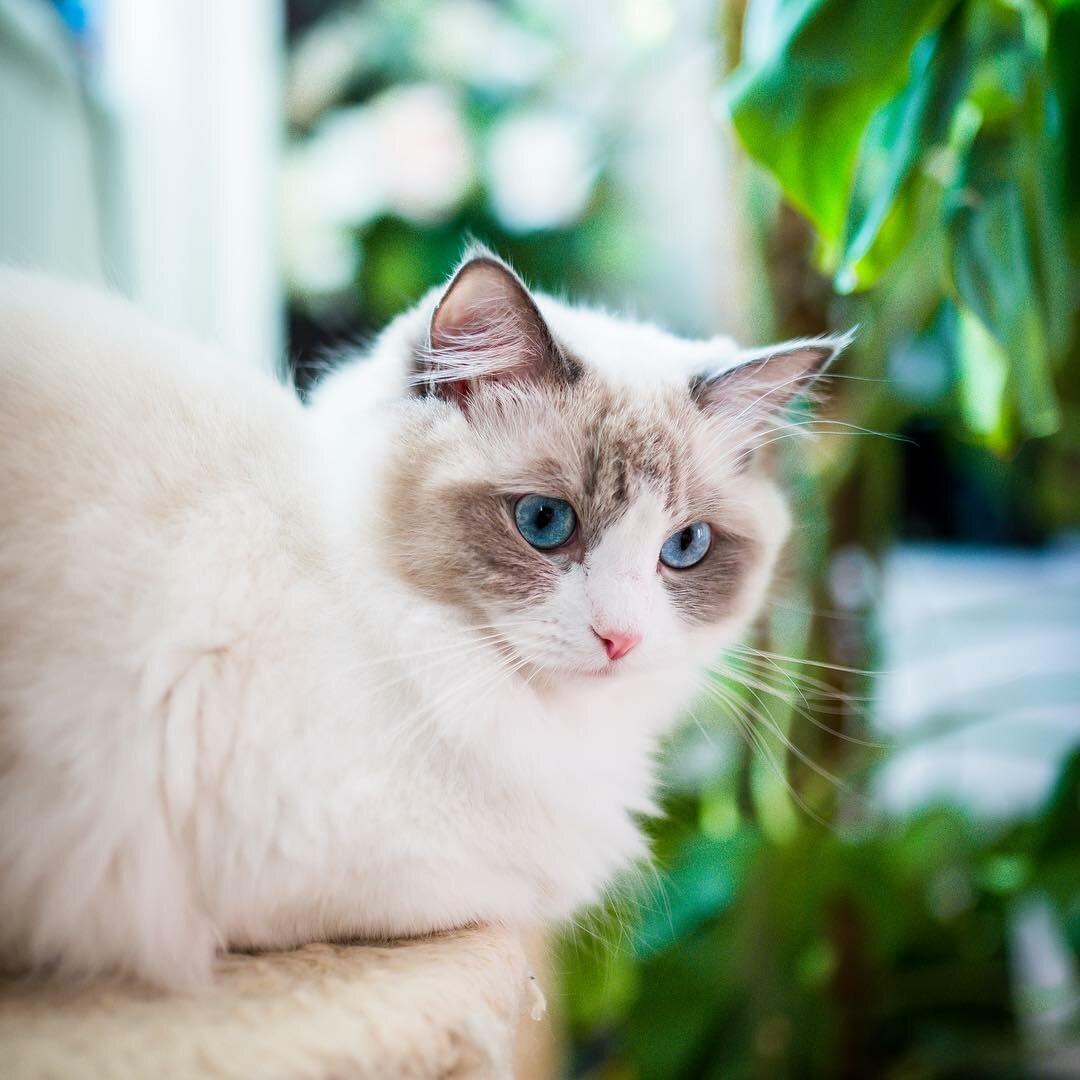 самые красивые кошки найти фото ковки