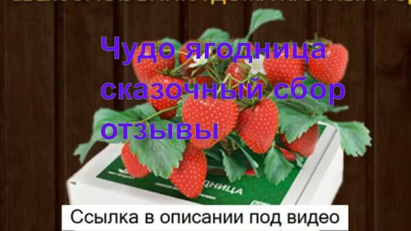 ягоды годжи ютуб