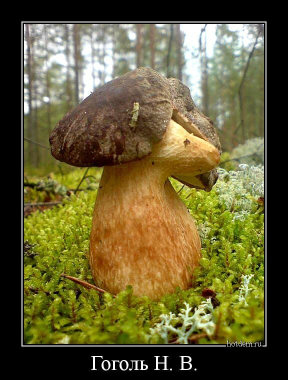 таком картинки смешные лес грибы вас фотографируют